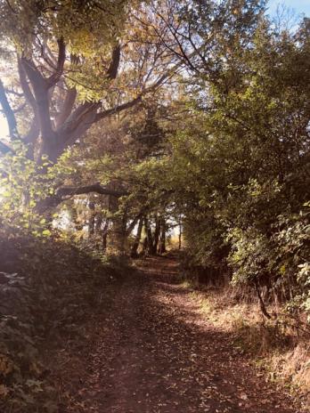 Home autumn pic
