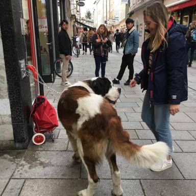 Salzburg dog pic.png