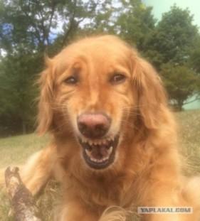 Dog laughing meme