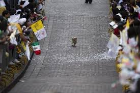 Parade for dog pic.jpg